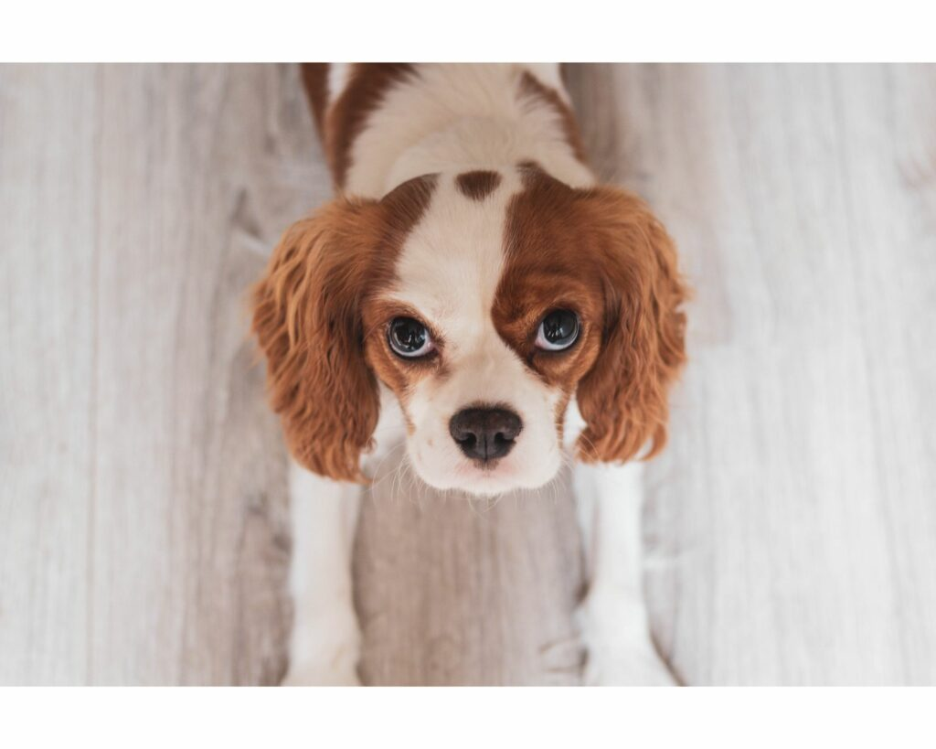 Have You Considered Estate Planning for Fido?